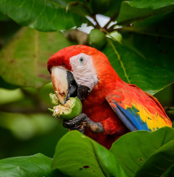 2018-07-16_09h06m40s_850_5013_Costa Rica.jpg