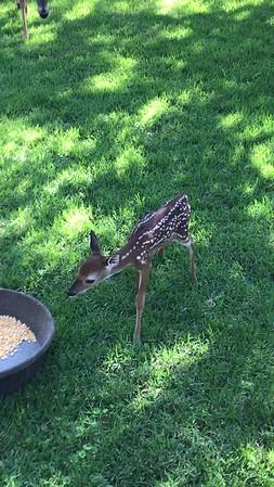 Backyard Critters
