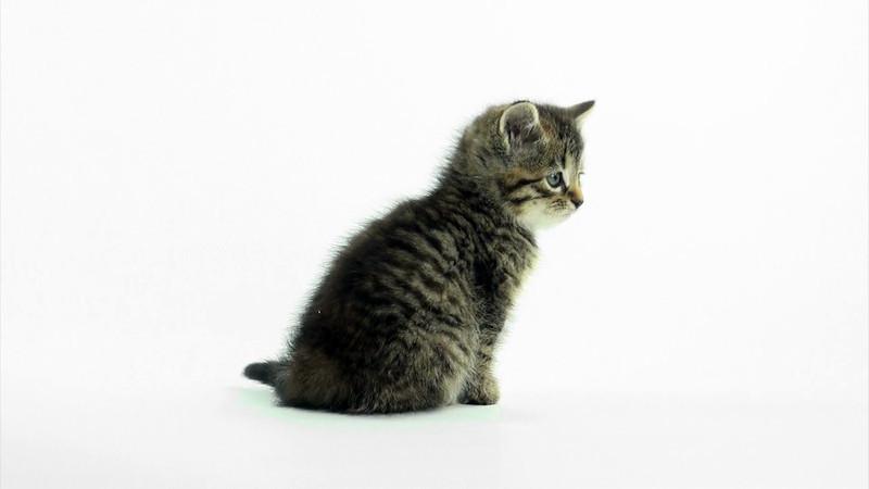 Kittens_tabby_025.mov