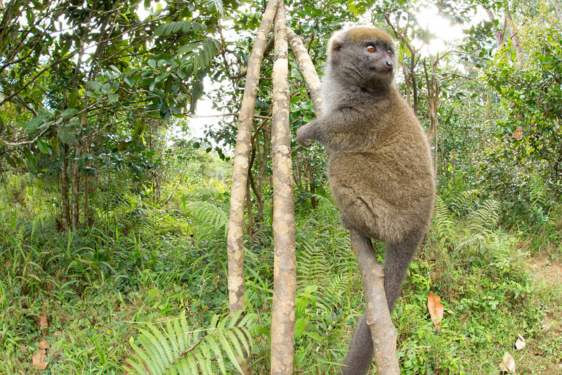 Madagascar_2013_FH0T8773.jpg