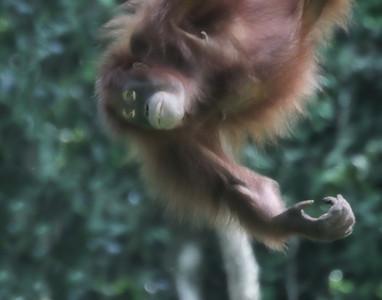Orangutan Galley
