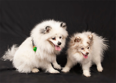 PAWs for a Cause Photo Shoot