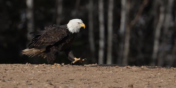 Eagles Dec,8 2019