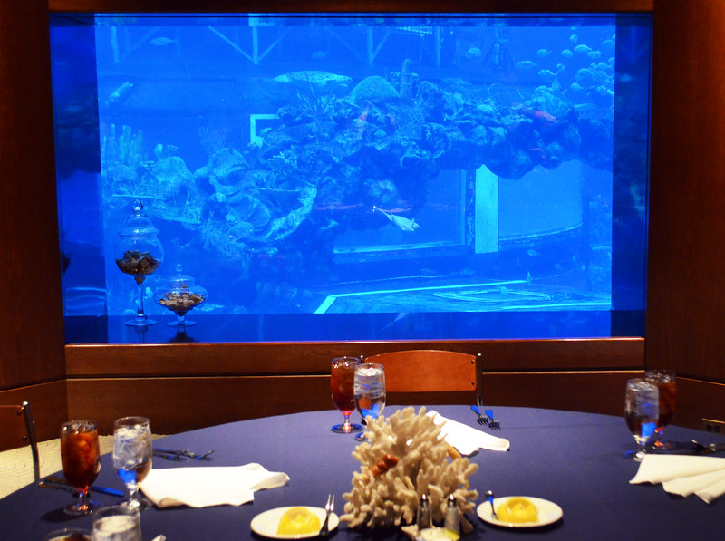 Day 6: Lunch in the VIP lounge next to the aquarium at Epcot's The Seas with Nemo and Friends, photo by Dave Parfitt