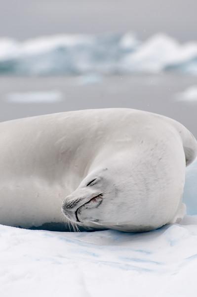 Antarctica 2015 (22 of 99).jpg