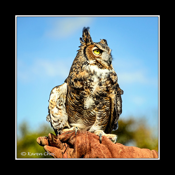 Great Horned Owl 2 sm.jpg