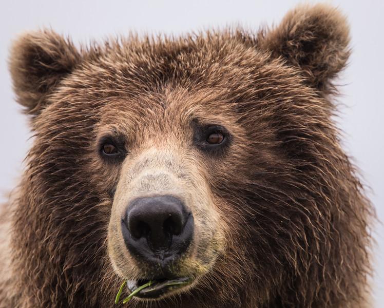 alaska-bears-32.jpg