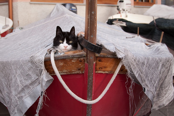 IMG_4882-2-38 Look who's hiding in a boat!