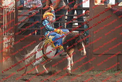 Towner Aug Bucking Ponies