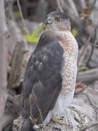 2008-11-17 Columbia Bottom CA and Riverlands Migratory Bird Sanctuary