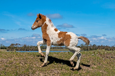 Catwalk Chaos' Filly