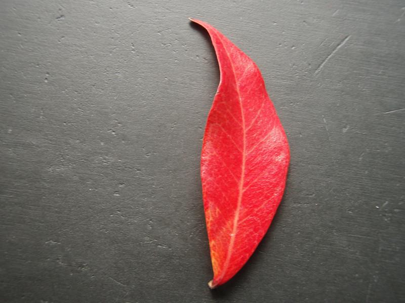 2006_11_16-14_14_09.jpg