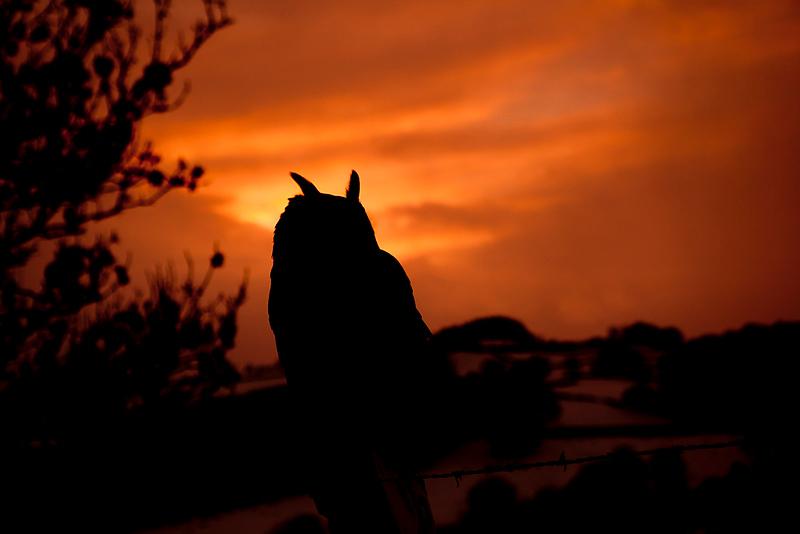 Owl sill 2.jpg