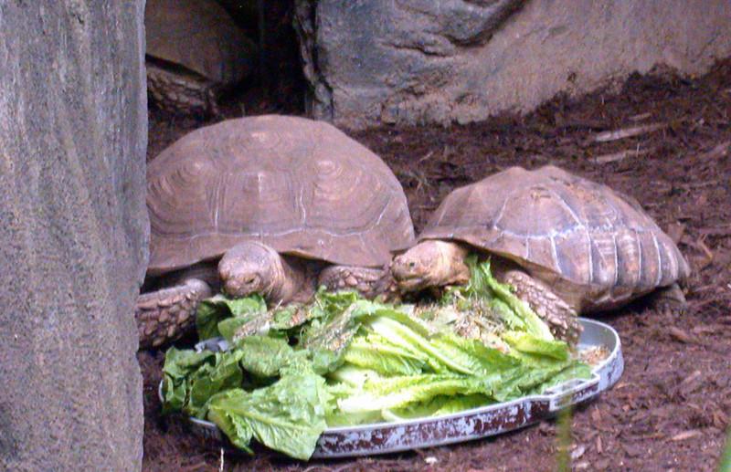 Turtles With The Munchies, NC Zo_25070612.jpg