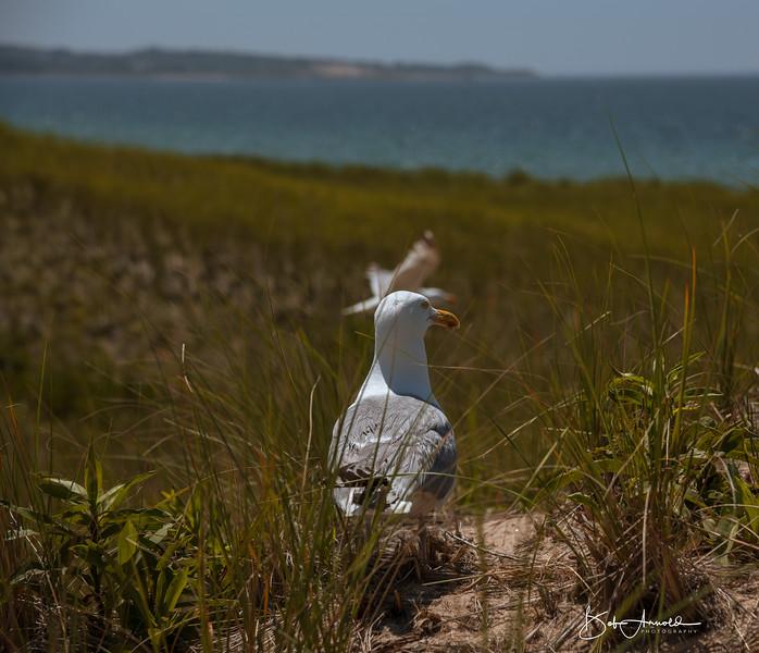 Block Island-33.jpg