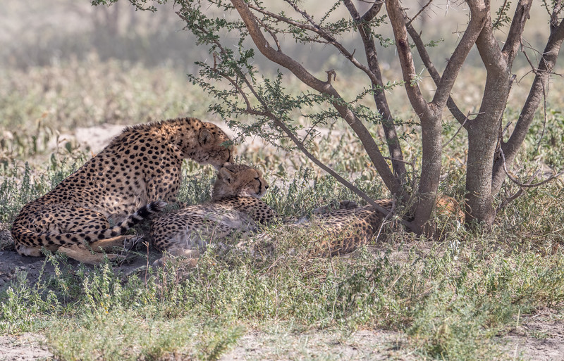 Tanzania_Feb_2018-46.jpg