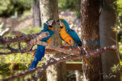 3/18/19 Spring At Caldwell Zoo by Don Spivey