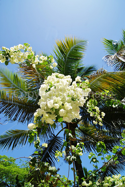 #55 Sunshine flowers in front of Palm.JPG