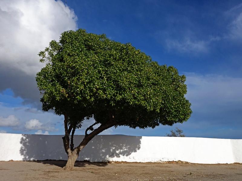 Armancao de Pera 17-03-15 (41).jpg