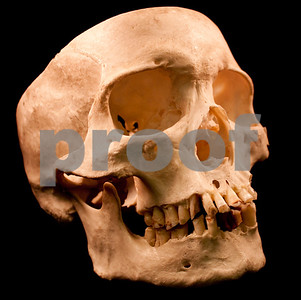 human-skull-donated-to-goodwill-store-in-texas