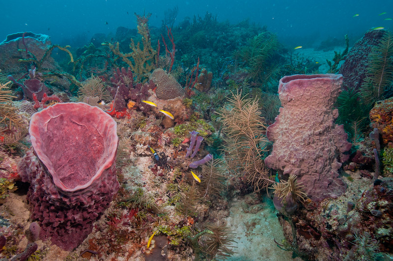 Deep reef at the edge of Biscayne NatioanL Park.