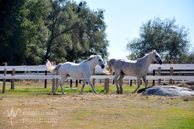 EB&Horses-120.jpg