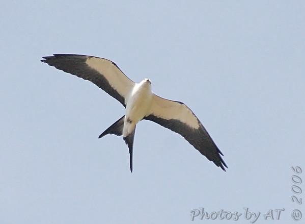 Birding 2006 July-August