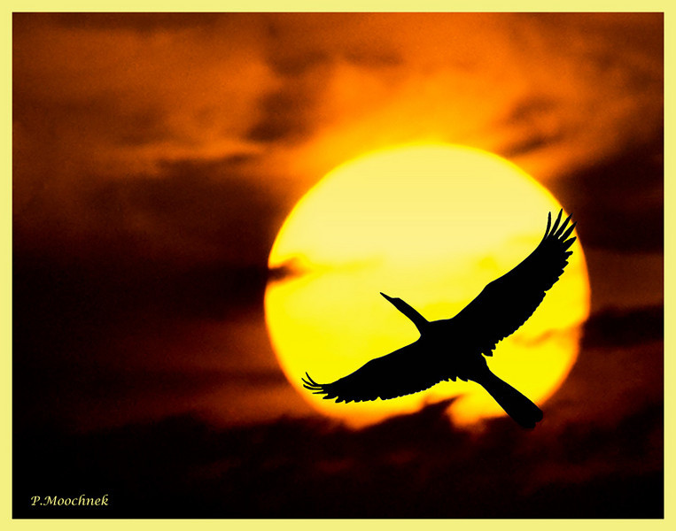 anhinga-sunset.jpg