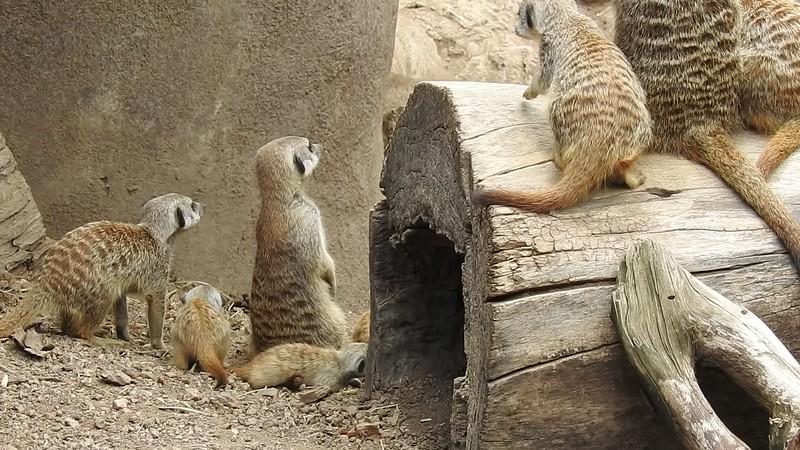 Cheyenne Mtn Zoo 2017 (2280).MOV