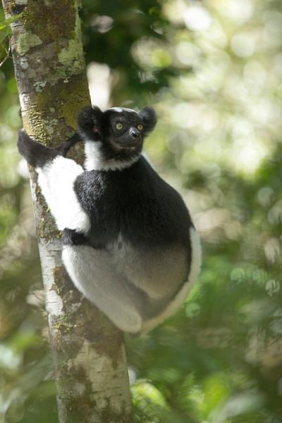 Madagascar_2013_FH0T9588.jpg