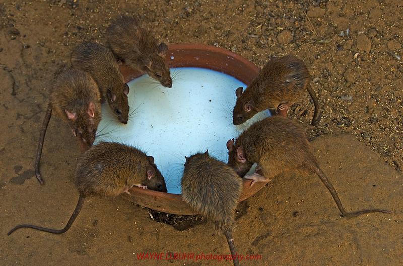 INDIA2010-0206A-64A.jpg