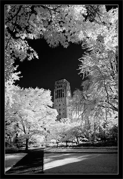 Tower Through the Trees  View of the Burton Memorial Tower from the Lydia Mendelssohn Theater courtyard  University of Michigan, Ann Arbor  28-JUN-2008