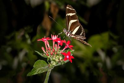 Costa Rica, 2019