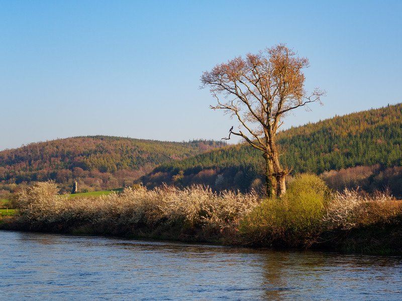 View from the Suir towpath
