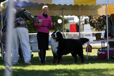 Veteran 7-9yr Dog BMDCW 2010