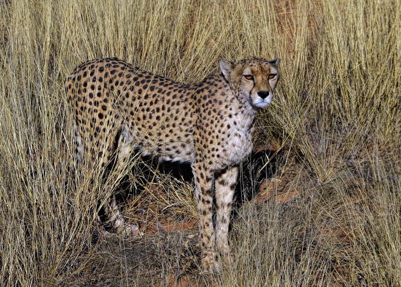 OKONJIMA - NAMIBIA