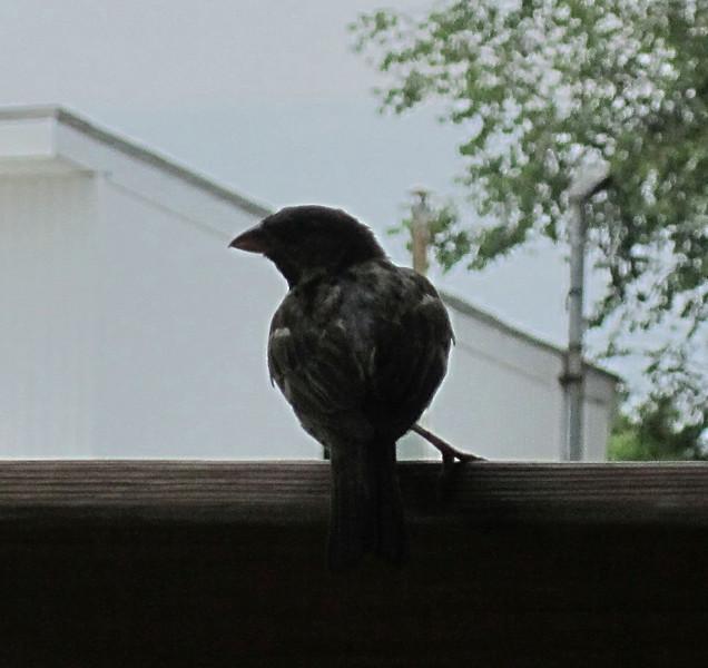 JoJo Apples Bird 2.jpg