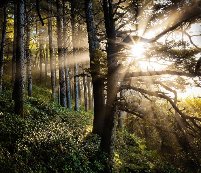 Sweet Creek Woods-5595.JPG