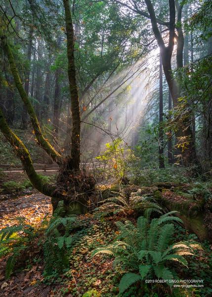 Muir Woods-7185.jpg
