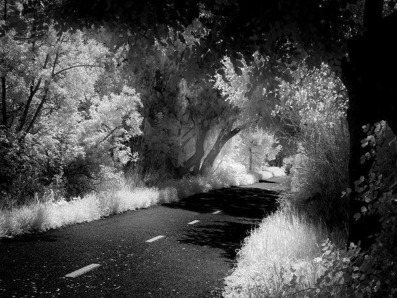 Los Gatos Creek Trail, Campbell, California, 2010