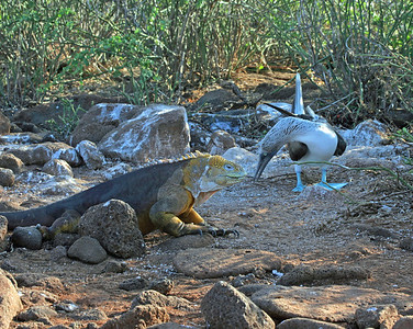 Galapagos With Galapagos Travel