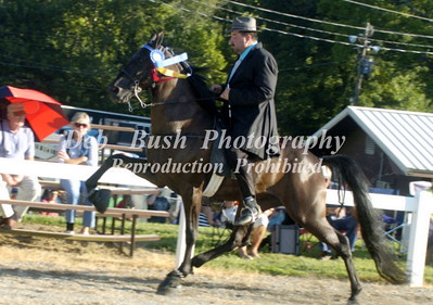 CLASS 9  OPEN 3 & 4 YR OLD RACKING AD - TC