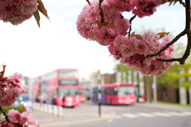 14 Blossoms.jpg