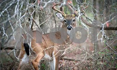 texas-deer-study-group-workshop-may-1112-in-llano