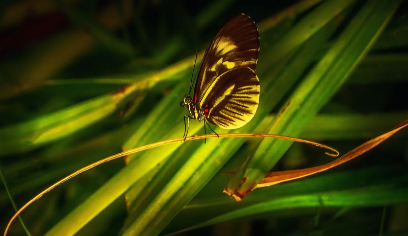Butterfly-189.jpg