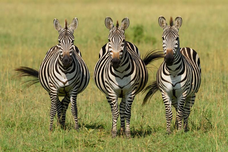 20160213_0476_Serengeti_Day_5.jpg