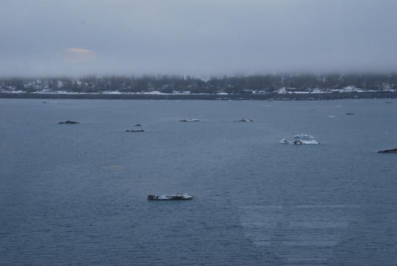 Friday, May 25th we sail into Glacier Bay