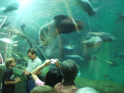 Aquariums