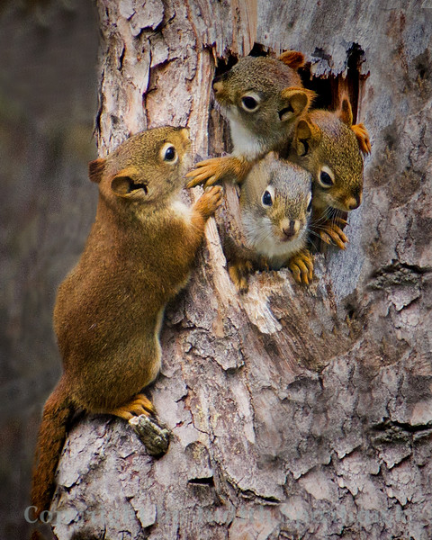 Four Squirrel Babies