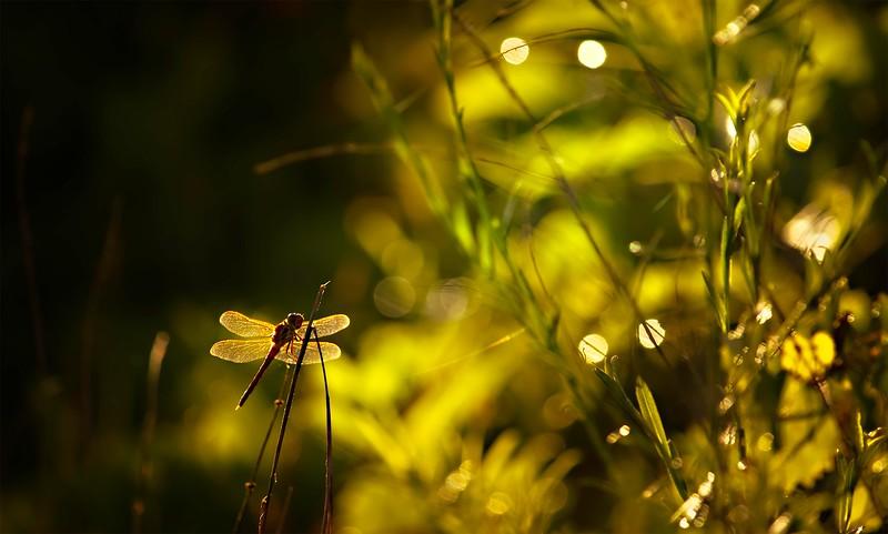 The Magic of Light-385.jpg